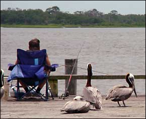 Count on the pelicans to help you fish.