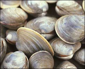 Cedar Key Clams served at the Cedar Key Seafood Festival