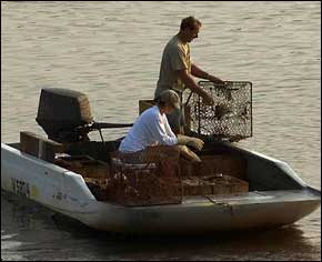 Fishermen checking crab traps